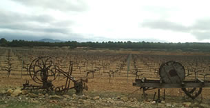 ラ・アタラヤ・デル・カミーノ畑