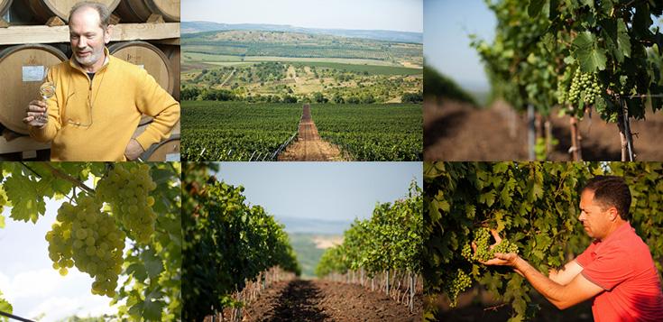 RADACINI アルバストレレ・ワインズ ブラン・ド・カベルネ ワイン